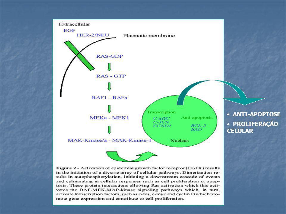 ImunoHistoquímica de Glândulas Mamárias Neoplásicas ( fixadas em Parafina ) Utilizou-se anticorpo anti-HER2/neu ERBB2 ou HER-2/neu
