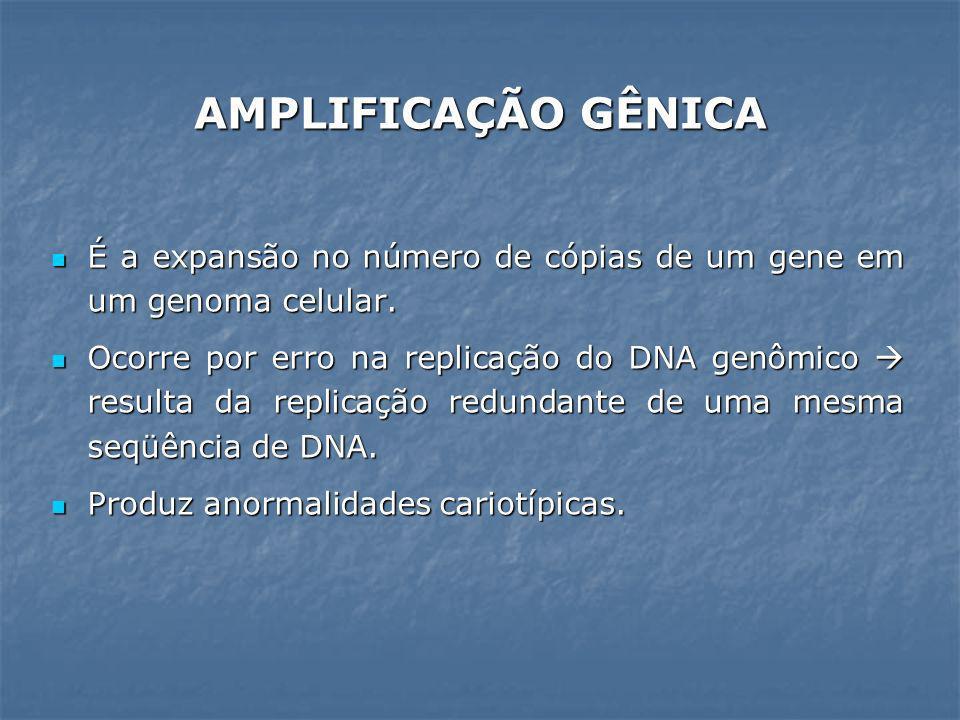 AMPLIFICAÇÃO GÊNICA É a expansão no número de cópias de um gene em um genoma celular. É a expansão no número de cópias de um gene em um genoma celular