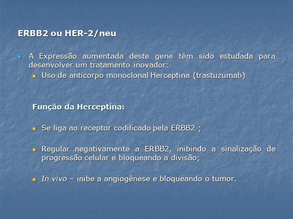 ERBB2 ou HER-2/neu A Expressão aumentada deste gene têm sido estudada para desenvolver um tratamento inovador: A Expressão aumentada deste gene têm si