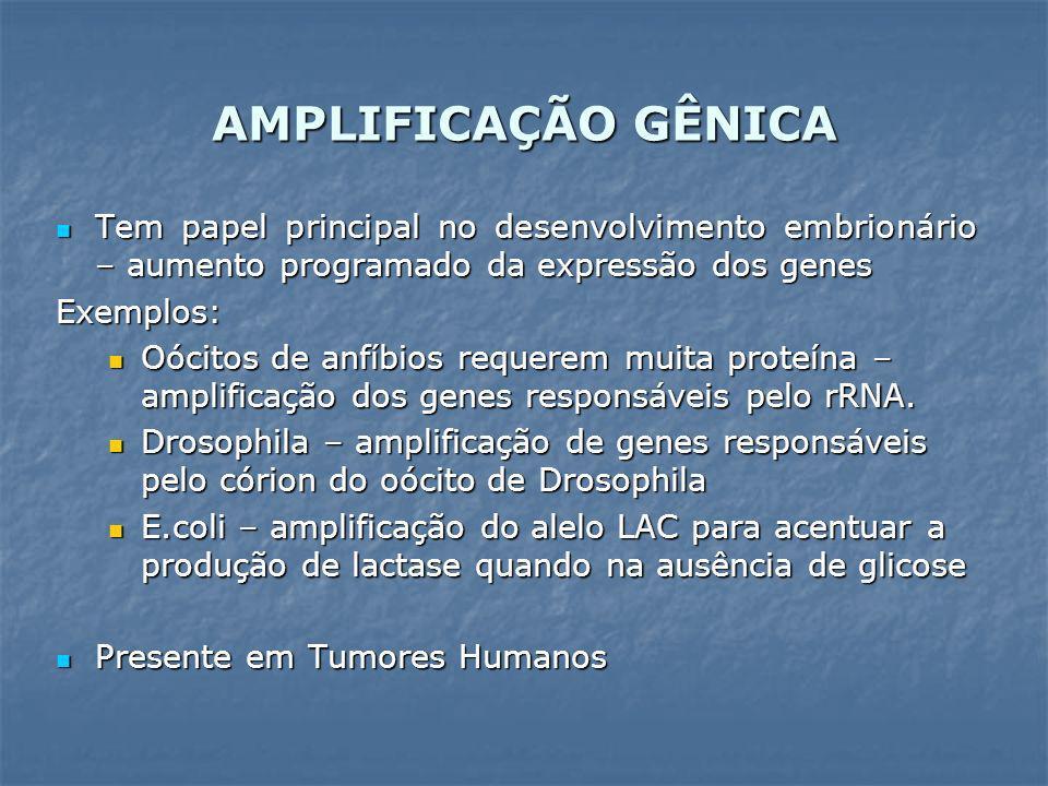 HSR – Regiões Homogêneas de Coloração segmentos de DNA intracromossômico segmentos de DNA intracromossômico forma regiões grandes no genoma que: forma regiões grandes no genoma que: não apresentam bandas quando submetidas à técnica de banda-G não apresentam bandas quando submetidas à técnica de banda-G podem ser detectadas por hibridização in situ com sonda fluorescente (FISH) podem ser detectadas por hibridização in situ com sonda fluorescente (FISH) DM – Duplos Cromossomos Diminutos (Double Minutes) círculos de DNA extracromossômico com 1 a 2 milhões de pb que se replicam autonomicamente círculos de DNA extracromossômico com 1 a 2 milhões de pb que se replicam autonomicamente cromossomos miniatura cromossomos miniatura não apresentam centrômero - segrega ao acaso para as células-filhas não apresentam centrômero - segrega ao acaso para as células-filhas AMPLIFICAÇÃO GÊNICA