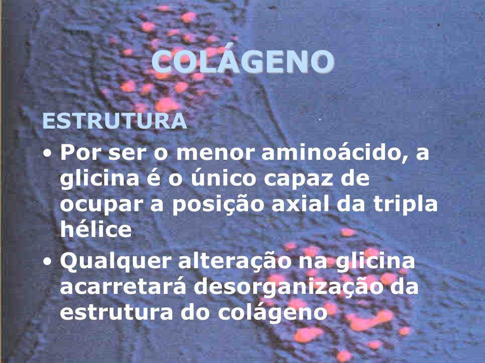 COLÁGENO ESTRUTURA Por ser o menor aminoácido, a glicina é o único capaz de ocupar a posição axial da tripla hélice Qualquer alteração na glicina acarretará desorganização da estrutura do colágeno