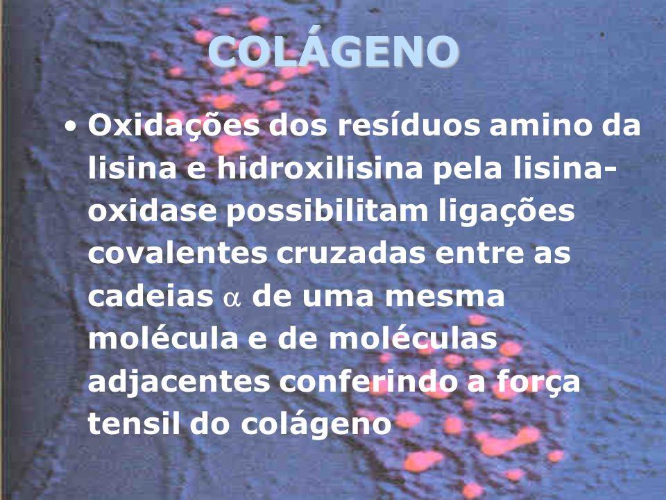 COLÁGENO Oxidações dos resíduos amino da lisina e hidroxilisina pela lisina- oxidase possibilitam ligações covalentes cruzadas entre as cadeias de uma mesma molécula e de moléculas adjacentes conferindo a força tensil do colágeno