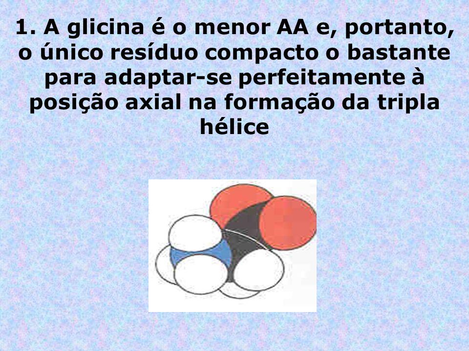 1. A glicina é o menor AA e, portanto, o único resíduo compacto o bastante para adaptar-se perfeitamente à posição axial na formação da tripla hélice