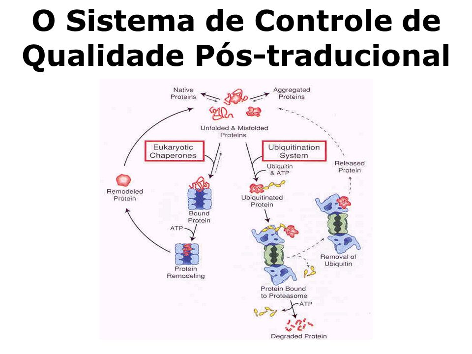 O Sistema de Controle de Qualidade Pós-traducional