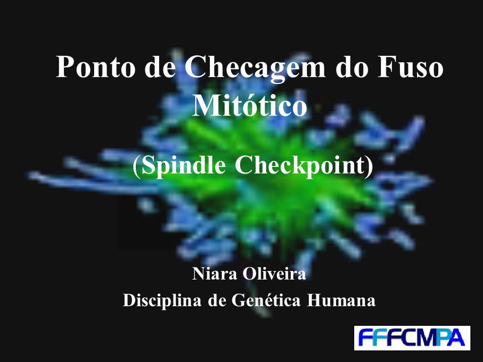 Ponto de Checagem do Fuso Mitótico (Spindle Checkpoint) Niara Oliveira Disciplina de Genética Humana