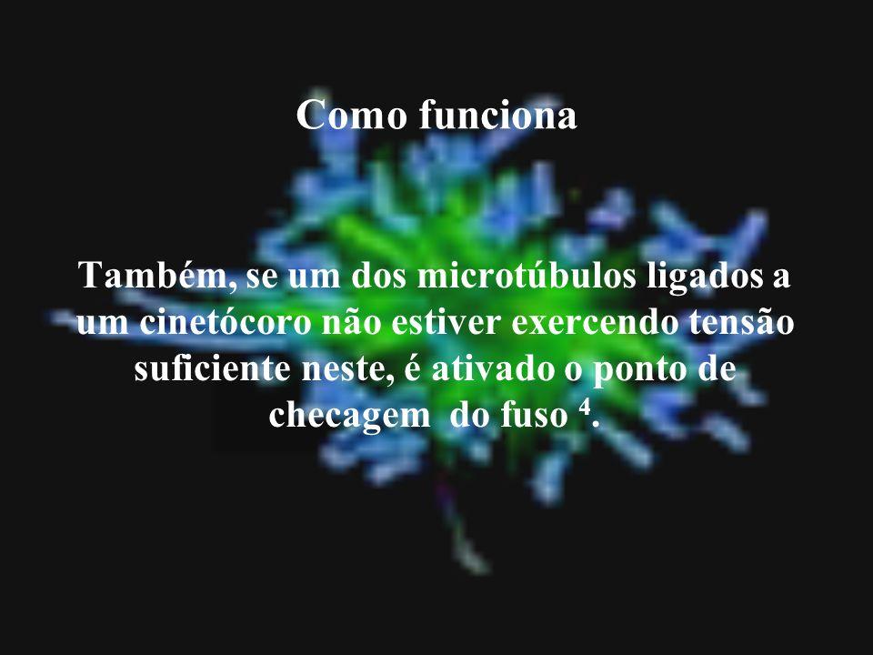 Como funciona Também, se um dos microtúbulos ligados a um cinetócoro não estiver exercendo tensão suficiente neste, é ativado o ponto de checagem do f