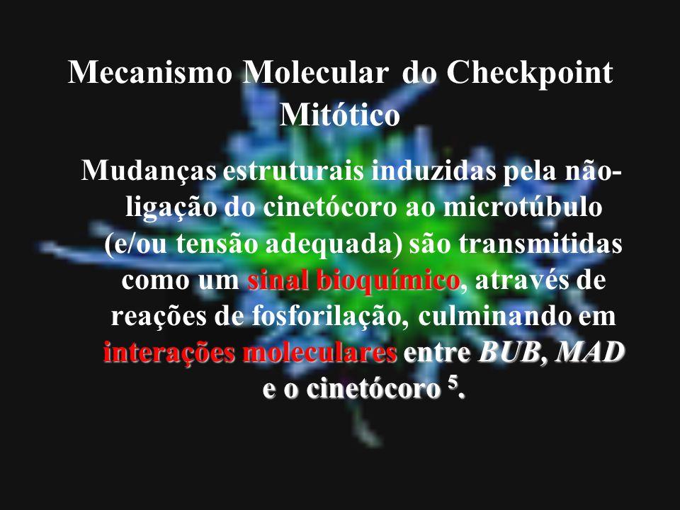 Mecanismo Molecular do Checkpoint Mitótico sinal bioquímico interações moleculares entre BUB, MAD e o cinetócoro 5. Mudanças estruturais induzidas pel