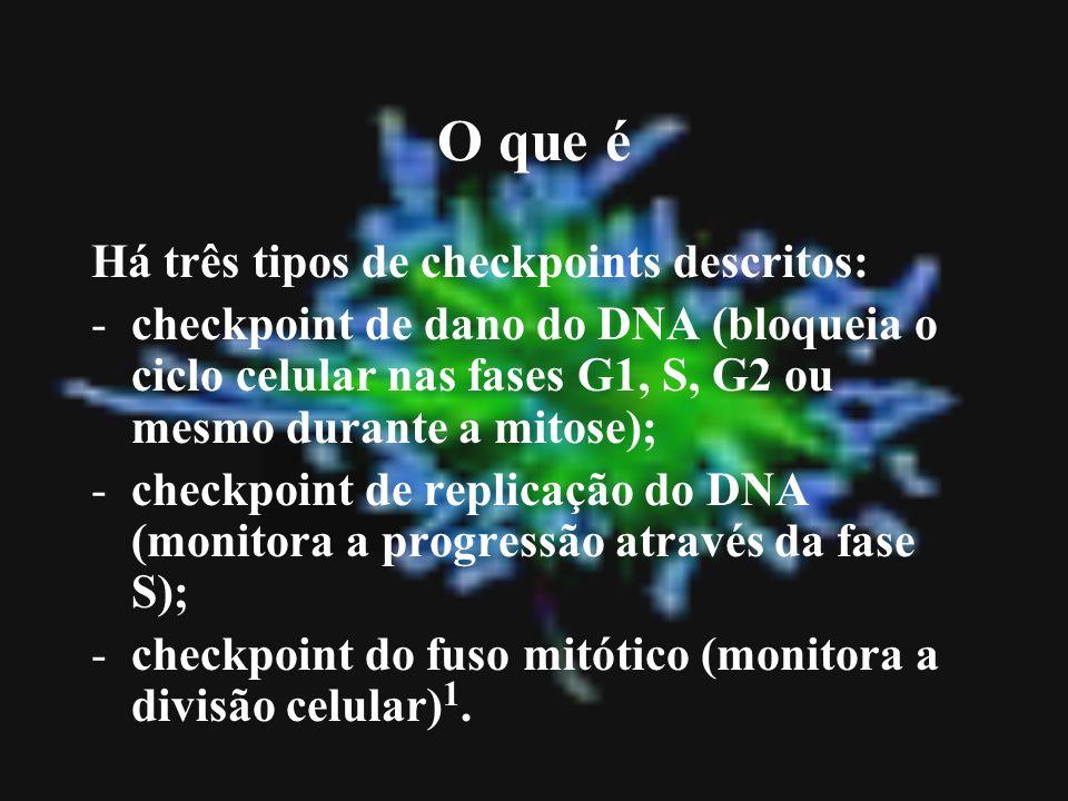 O que é Há três tipos de checkpoints descritos: -checkpoint de dano do DNA (bloqueia o ciclo celular nas fases G1, S, G2 ou mesmo durante a mitose); -