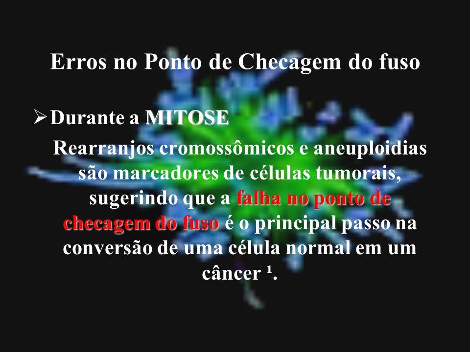 Erros no Ponto de Checagem do fuso MITOSE Durante a MITOSE falha no ponto de checagem do fuso Rearranjos cromossômicos e aneuploidias são marcadores d