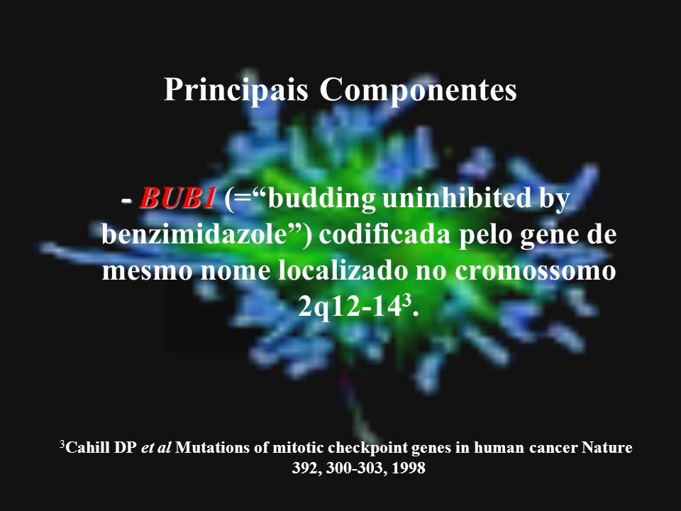 Principais Componentes - BUB1 - BUB1 (=budding uninhibited by benzimidazole) codificada pelo gene de mesmo nome localizado no cromossomo 2q12-14 3. 3