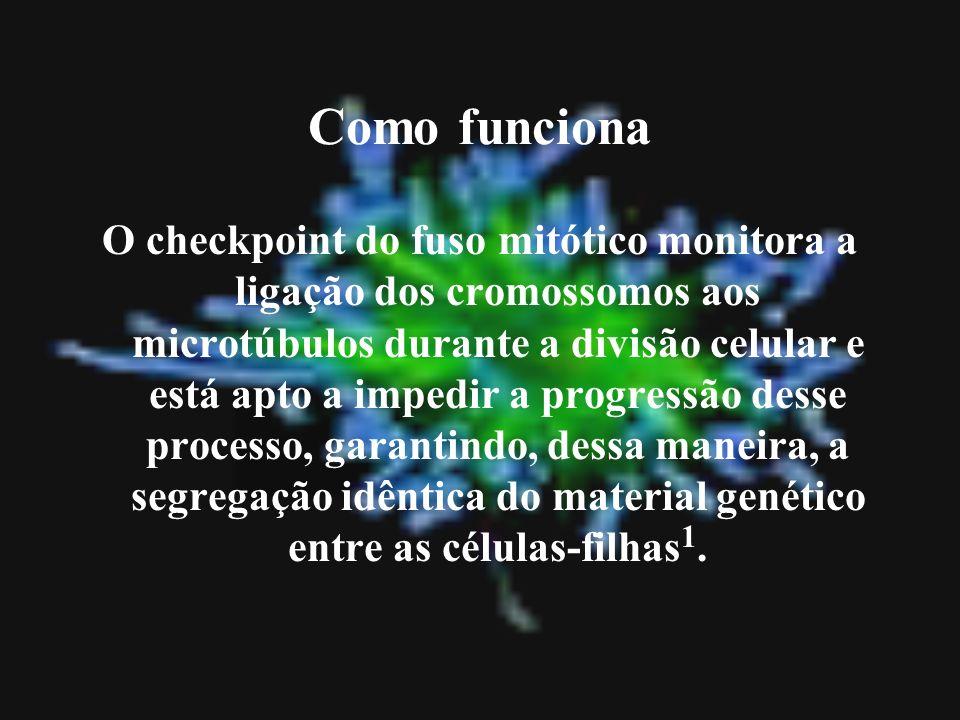 Como funciona O checkpoint do fuso mitótico monitora a ligação dos cromossomos aos microtúbulos durante a divisão celular e está apto a impedir a prog