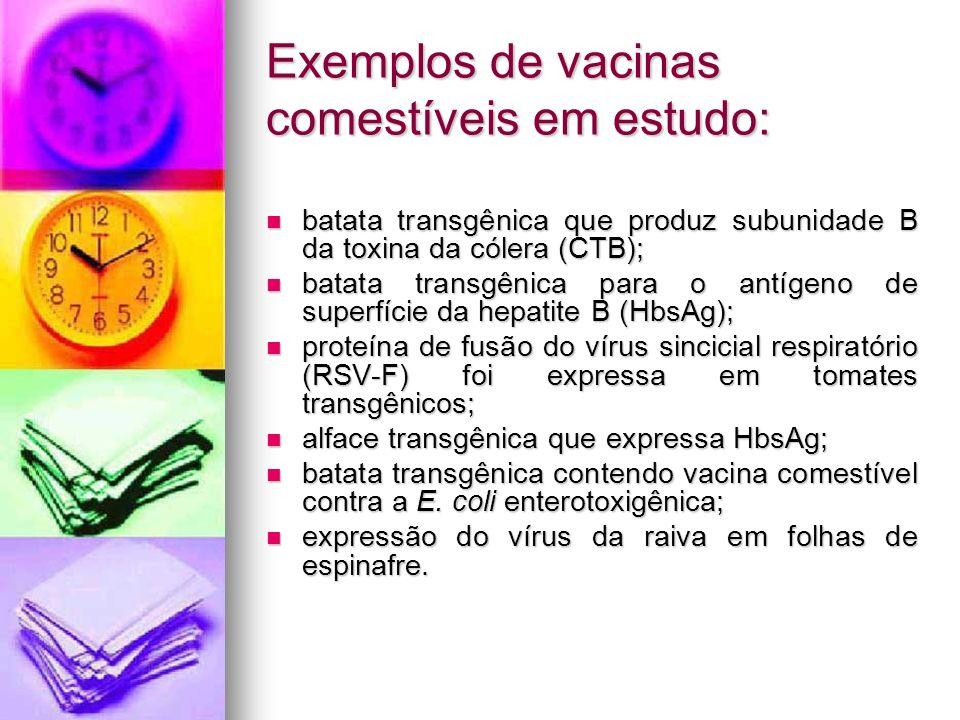 Exemplos de vacinas comestíveis em estudo: batata transgênica que produz subunidade B da toxina da cólera (CTB); batata transgênica que produz subunid