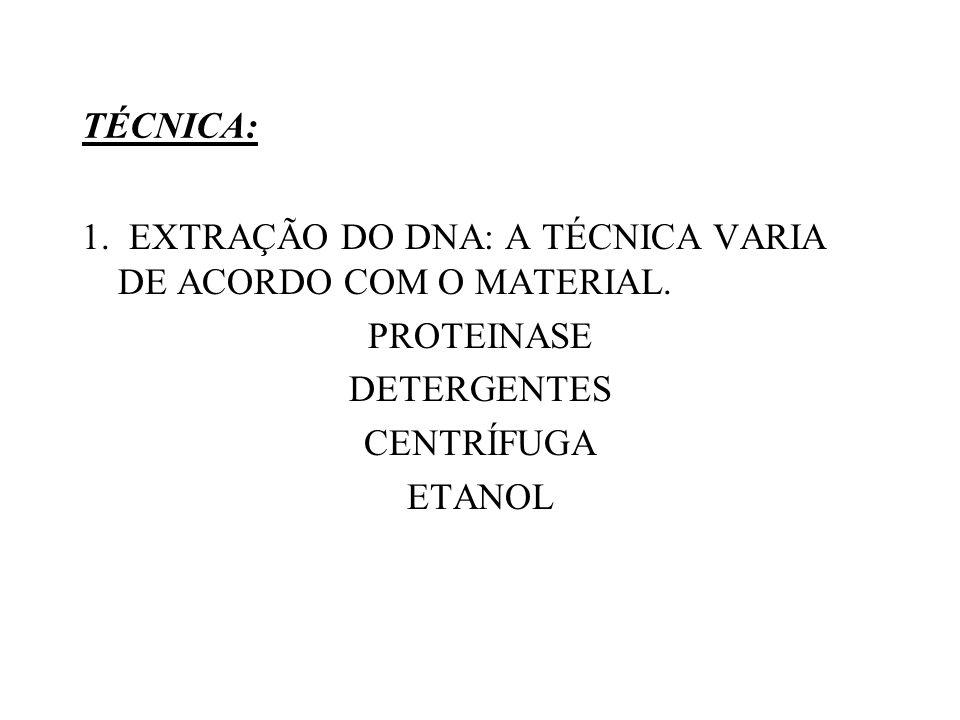 TÉCNICA: 1. EXTRAÇÃO DO DNA: A TÉCNICA VARIA DE ACORDO COM O MATERIAL. PROTEINASE DETERGENTES CENTRÍFUGA ETANOL