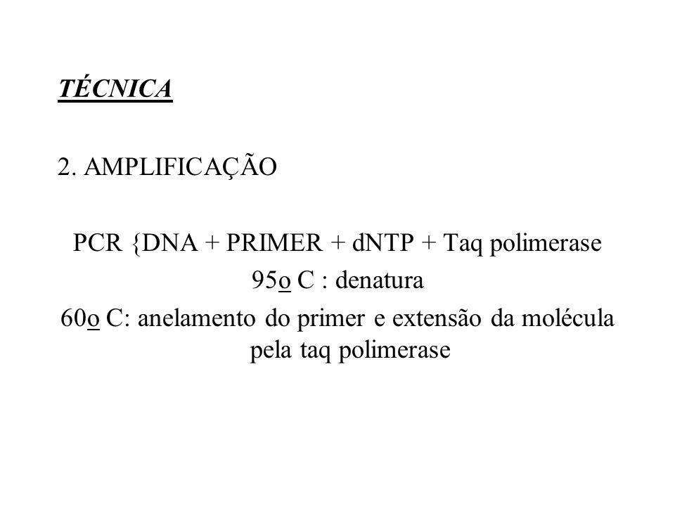 TÉCNICA 2. AMPLIFICAÇÃO PCR {DNA + PRIMER + dNTP + Taq polimerase 95o C : denatura 60o C: anelamento do primer e extensão da molécula pela taq polimer