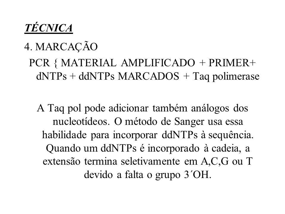 TÉCNICA 4. MARCAÇÃO PCR { MATERIAL AMPLIFICADO + PRIMER+ dNTPs + ddNTPs MARCADOS + Taq polimerase A Taq pol pode adicionar também análogos dos nucleot
