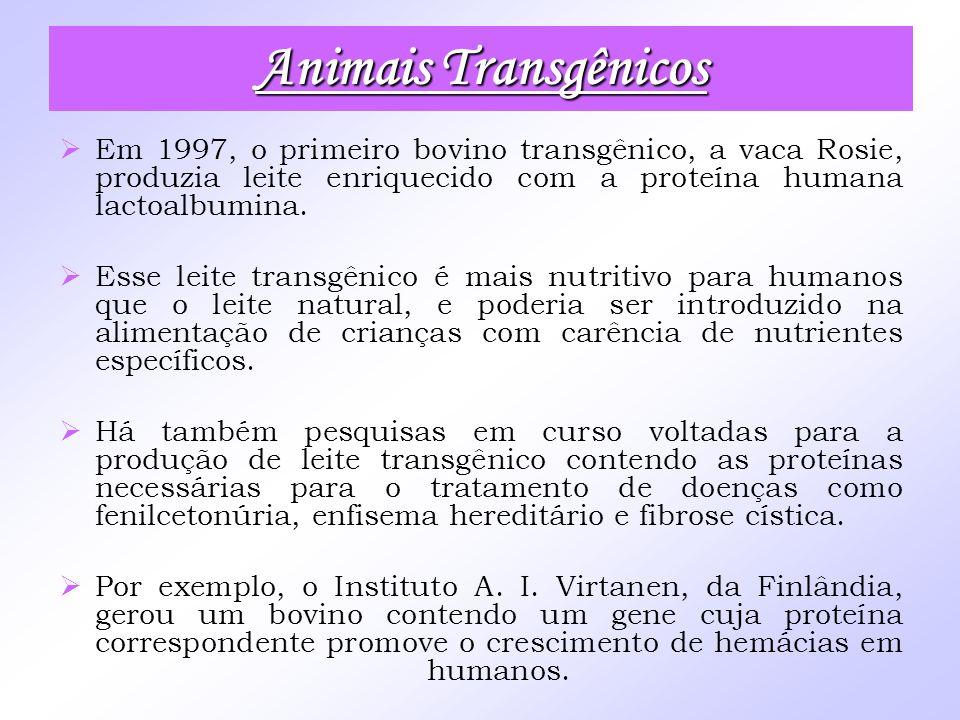 Em 1997, o primeiro bovino transgênico, a vaca Rosie, produzia leite enriquecido com a proteína humana lactoalbumina. Esse leite transgênico é mais nu