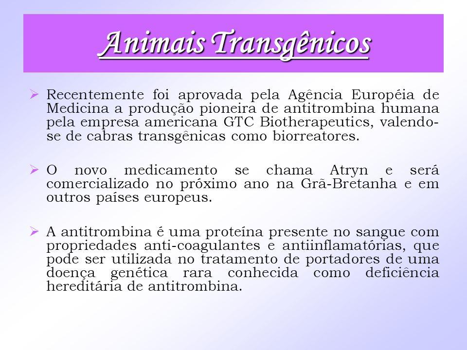 Animais Transgênicos Recentemente foi aprovada pela Agência Européia de Medicina a produção pioneira de antitrombina humana pela empresa americana GTC