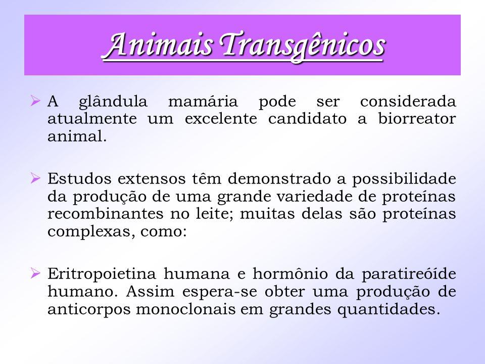 Animais Transgênicos A glândula mamária pode ser considerada atualmente um excelente candidato a biorreator animal. Estudos extensos têm demonstrado a