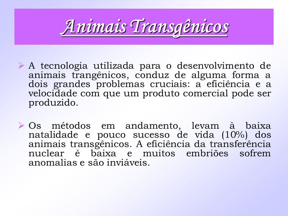 Animais Transgênicos A tecnologia utilizada para o desenvolvimento de animais trangênicos, conduz de alguma forma a dois grandes problemas cruciais: a