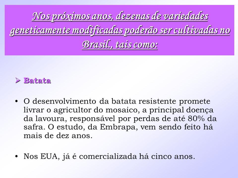 Batata Batata O desenvolvimento da batata resistente promete livrar o agricultor do mosaico, a principal doença da lavoura, responsável por perdas de
