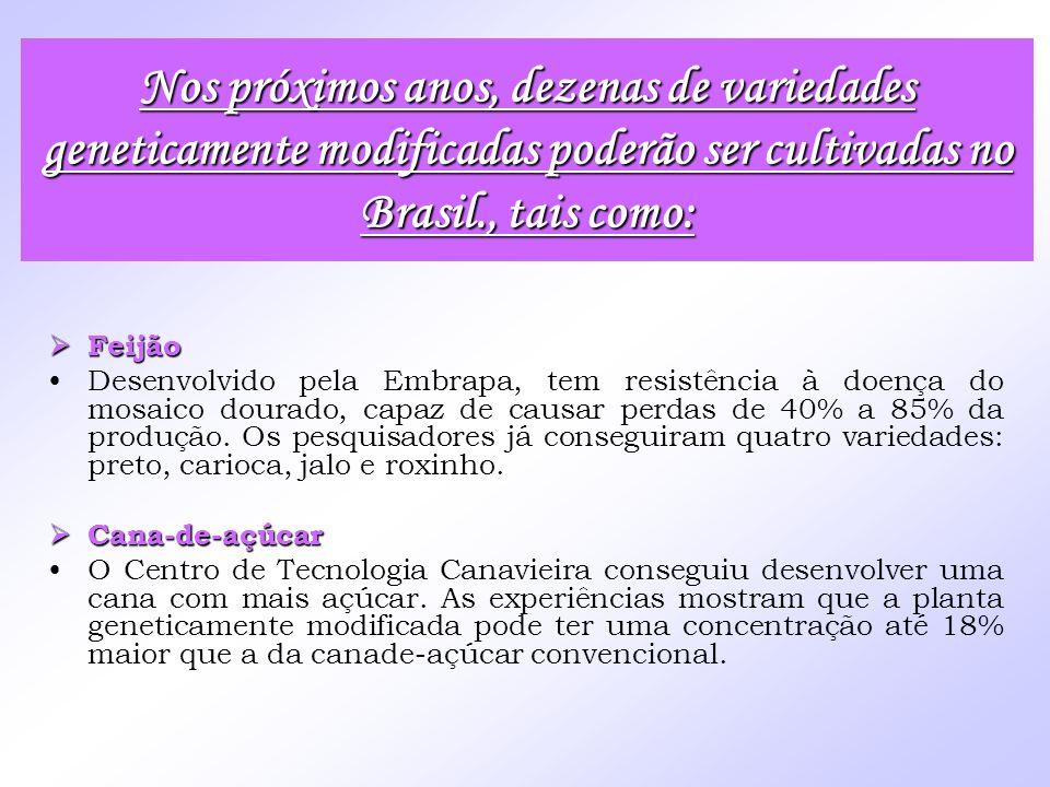 Feijão Feijão Desenvolvido pela Embrapa, tem resistência à doença do mosaico dourado, capaz de causar perdas de 40% a 85% da produção. Os pesquisadore