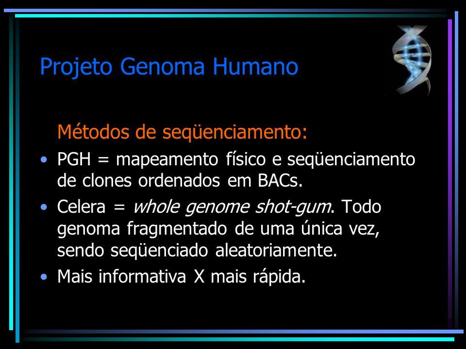 Projeto Genoma Humano Métodos de seqüenciamento: PGH = mapeamento físico e seqüenciamento de clones ordenados em BACs. Celera = whole genome shot-gum.
