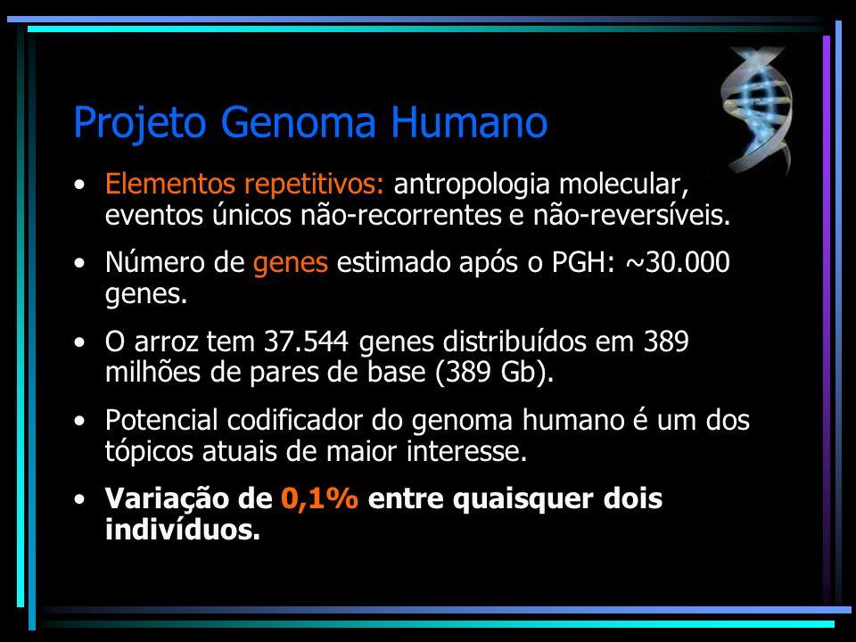 Projeto Genoma Humano Elementos repetitivos: antropologia molecular, eventos únicos não-recorrentes e não-reversíveis. Número de genes estimado após o