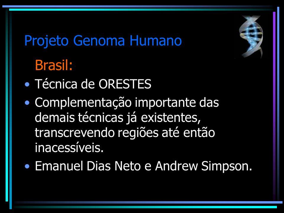 Projeto Genoma Humano Brasil: Técnica de ORESTES Complementação importante das demais técnicas já existentes, transcrevendo regiões até então inacessí