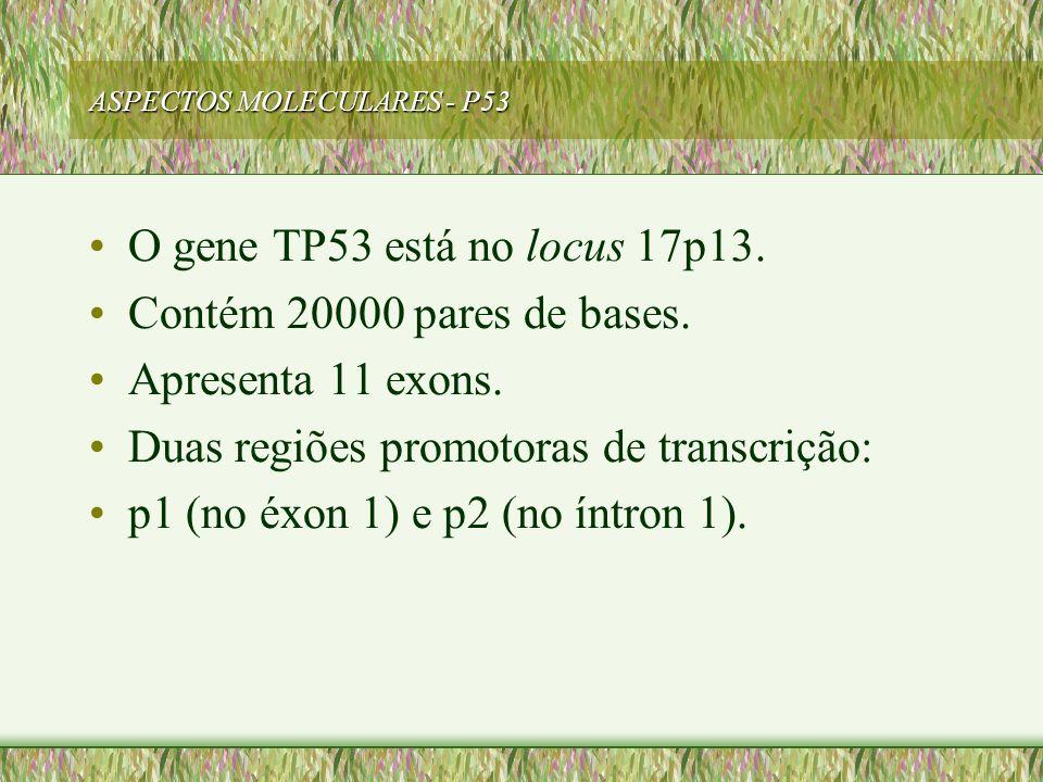 ASPECTOS MOLECULARES - P53 O gene TP53 está no locus 17p13. Contém 20000 pares de bases. Apresenta 11 exons. Duas regiões promotoras de transcrição: p