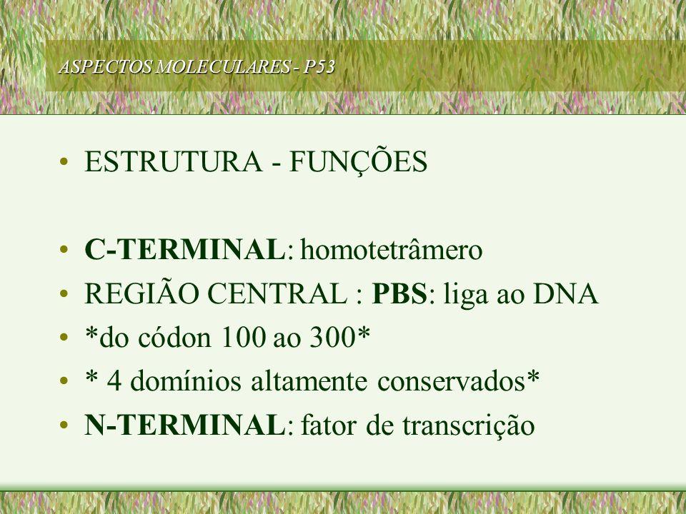 ASPECTOS MOLECULARES - P53 ESTRUTURA - FUNÇÕES C-TERMINAL: homotetrâmero REGIÃO CENTRAL : PBS: liga ao DNA *do códon 100 ao 300* * 4 domínios altament