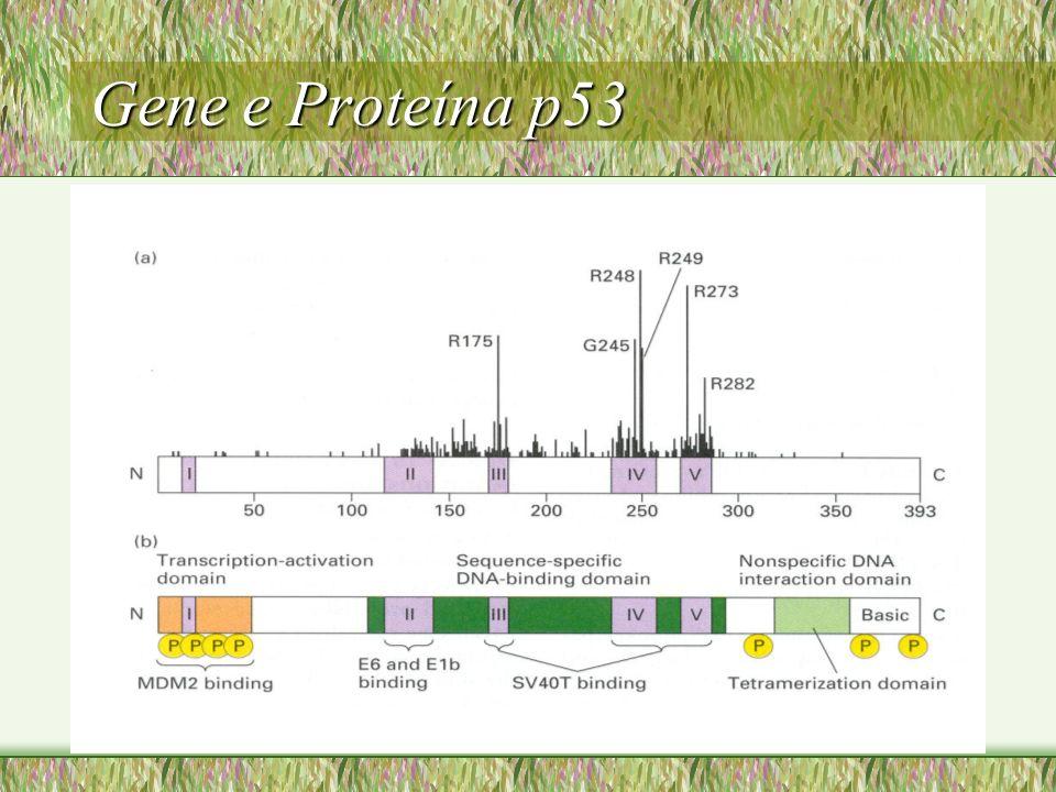 Gene e Proteína p53