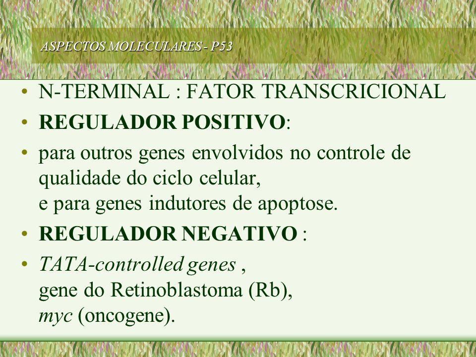 ASPECTOS MOLECULARES - P53 N-TERMINAL : FATOR TRANSCRICIONAL REGULADOR POSITIVO: para outros genes envolvidos no controle de qualidade do ciclo celula