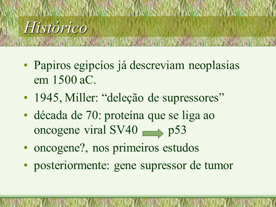 Histórico Papiros egipcíos já descreviam neoplasias em 1500 aC. 1945, Miller: deleção de supressores década de 70: proteína que se liga ao oncogene vi