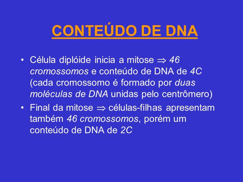 CONTEÚDO DE DNA Célula diplóide inicia a mitose 46 cromossomos e conteúdo de DNA de 4C (cada cromossomo é formado por duas moléculas de DNA unidas pelo centrômero) Final da mitose células-filhas apresentam também 46 cromossomos, porém um conteúdo de DNA de 2C