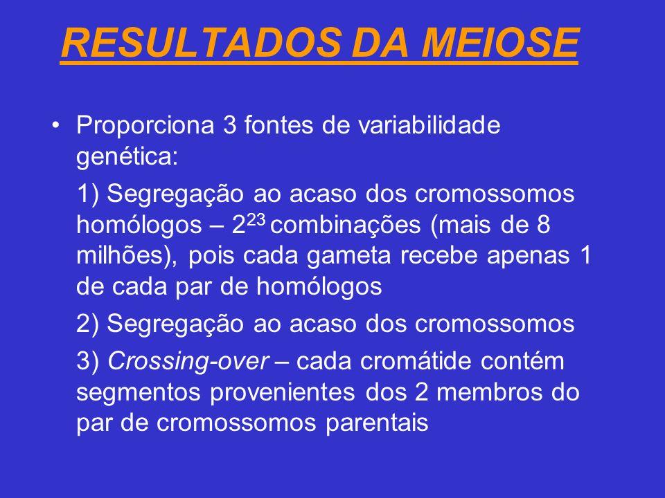 RESULTADOS DA MEIOSE Proporciona 3 fontes de variabilidade genética: 1) Segregação ao acaso dos cromossomos homólogos – 2 23 combinações (mais de 8 milhões), pois cada gameta recebe apenas 1 de cada par de homólogos 2) Segregação ao acaso dos cromossomos 3) Crossing-over – cada cromátide contém segmentos provenientes dos 2 membros do par de cromossomos parentais