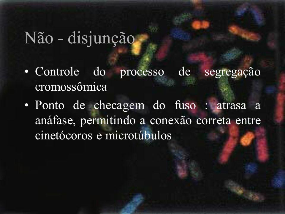 Não - disjunção Controle do processo de segregação cromossômica Ponto de checagem do fuso : atrasa a anáfase, permitindo a conexão correta entre cinet