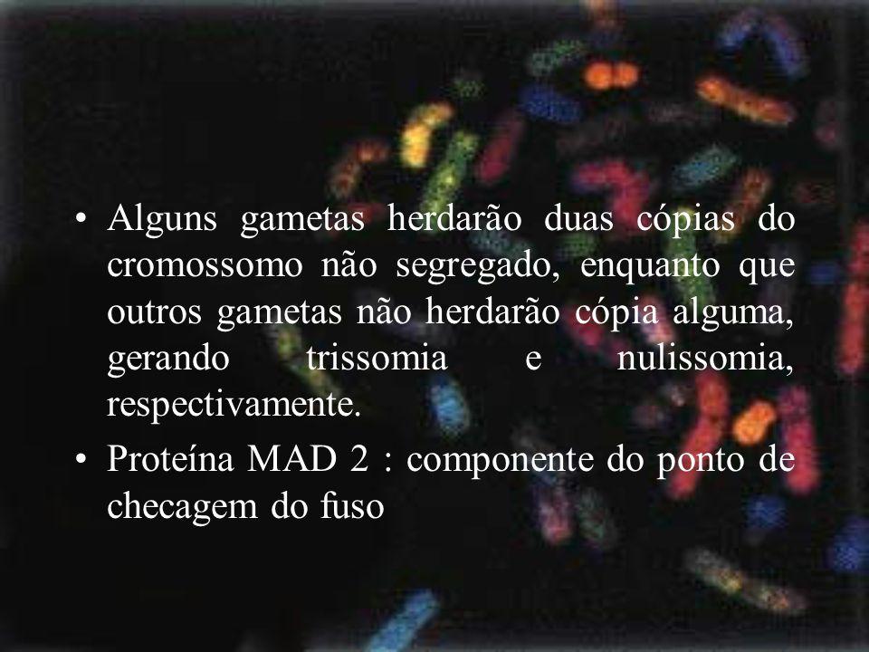 Alguns gametas herdarão duas cópias do cromossomo não segregado, enquanto que outros gametas não herdarão cópia alguma, gerando trissomia e nulissomia