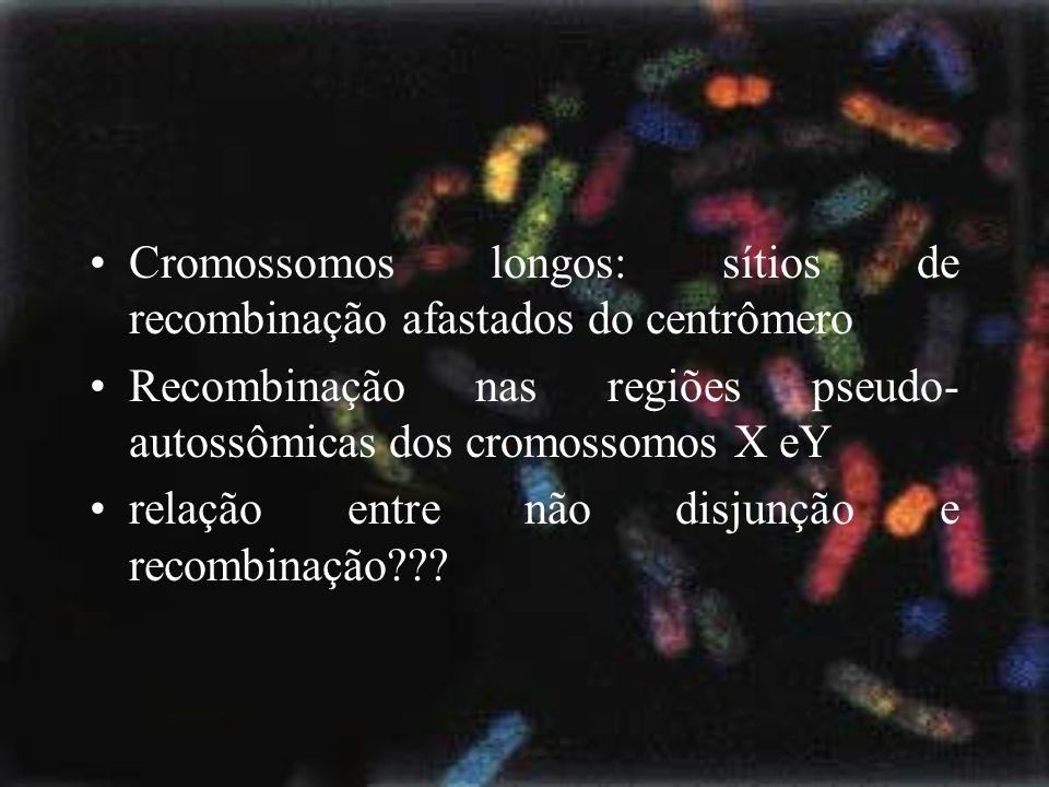Cromossomos longos: sítios de recombinação afastados do centrômero Recombinação nas regiões pseudo- autossômicas dos cromossomos X eY relação entre nã