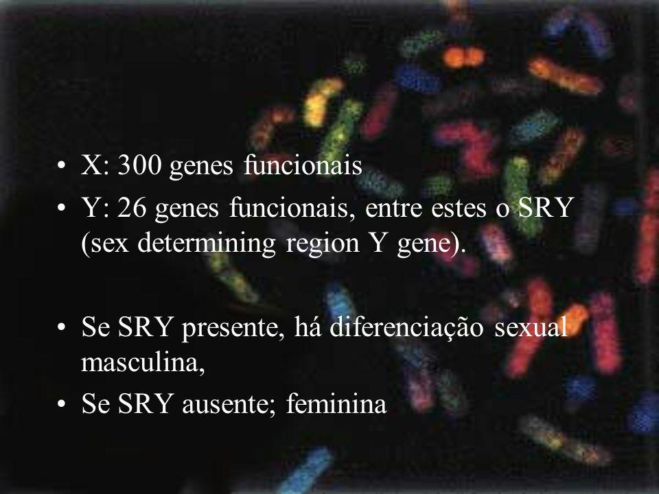 X: 300 genes funcionais Y: 26 genes funcionais, entre estes o SRY (sex determining region Y gene). Se SRY presente, há diferenciação sexual masculina,