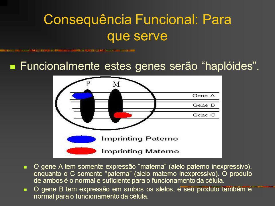 Consequência Funcional: Para que serve Funcionalmente estes genes serão haplóides. O gene A tem somente expressão materna (alelo paterno inexpressivo)