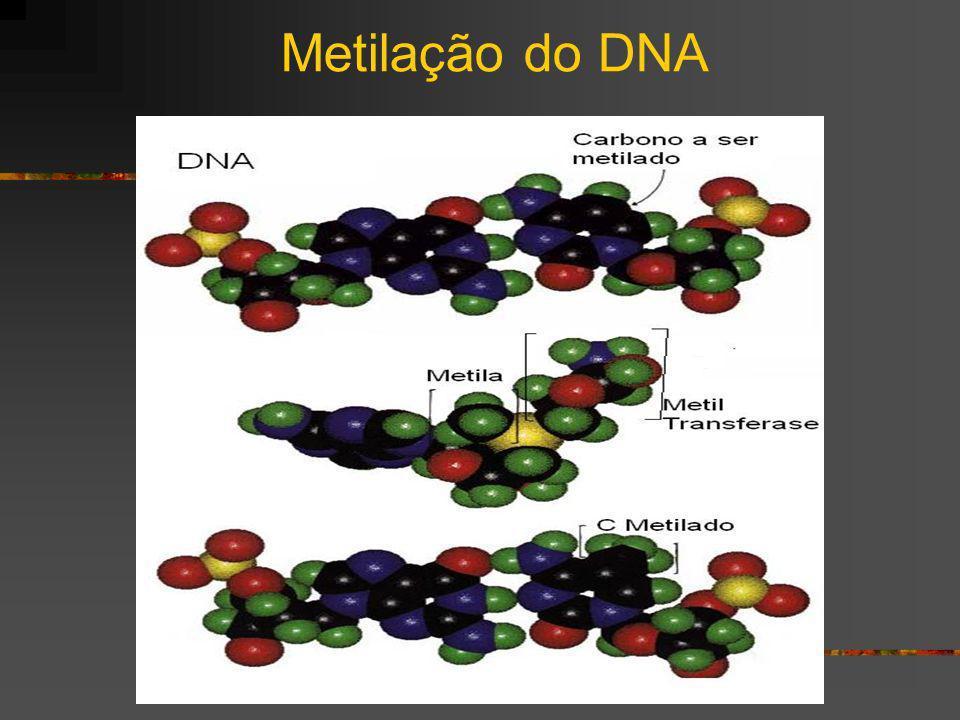 Metilação do DNA