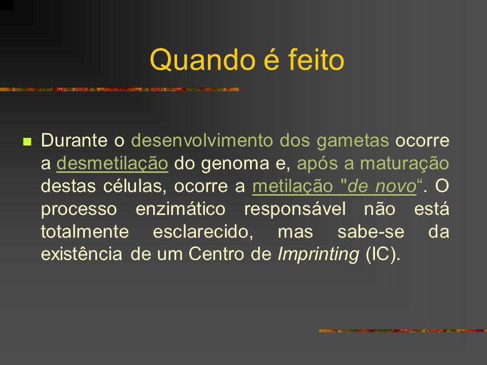 Quando é feito Durante o desenvolvimento dos gametas ocorre a desmetilação do genoma e, após a maturação destas células, ocorre a metilação