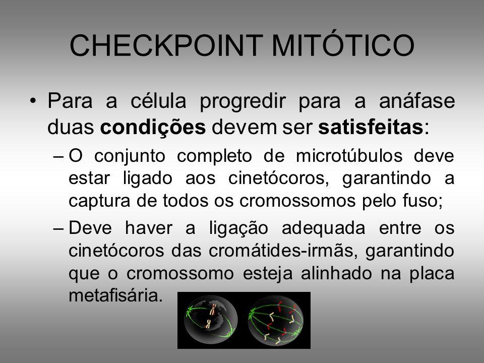 CHECKPOINT MITÓTICO Para a célula progredir para a anáfase duas condições devem ser satisfeitas: –O conjunto completo de microtúbulos deve estar ligad