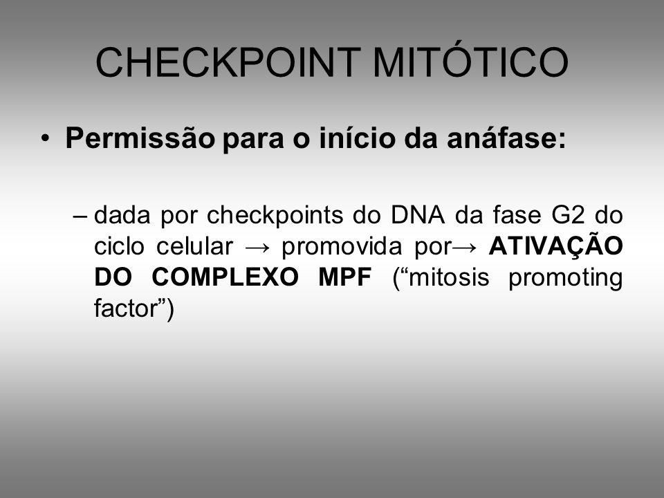 CHECKPOINT MITÓTICO Permissão para o início da anáfase: –dada por checkpoints do DNA da fase G2 do ciclo celular promovida por ATIVAÇÃO DO COMPLEXO MP