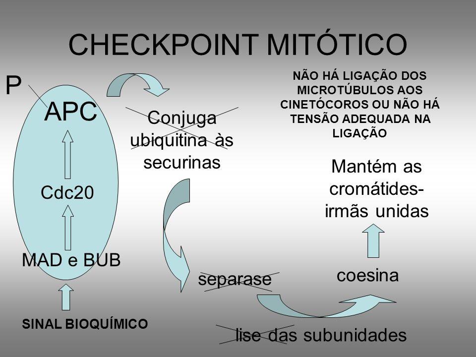 CHECKPOINT MITÓTICO APC Conjuga ubiquitina às securinas separase coesina lise das subunidades Mantém as cromátides- irmãs unidas Cdc20 SINAL BIOQUÍMIC