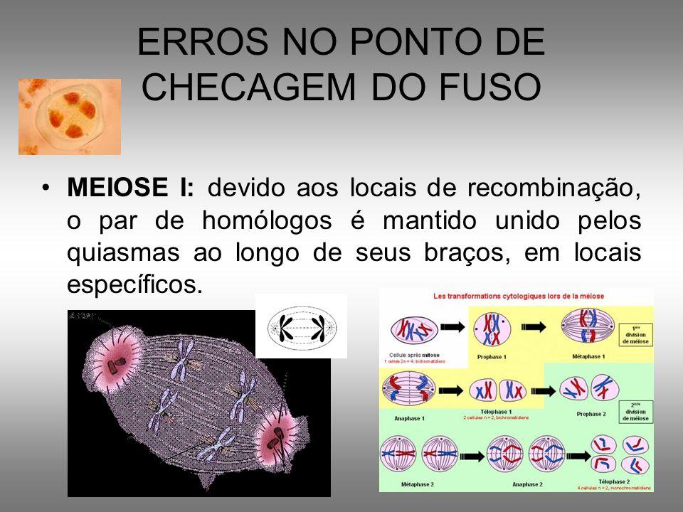 ERROS NO PONTO DE CHECAGEM DO FUSO MEIOSE I: devido aos locais de recombinação, o par de homólogos é mantido unido pelos quiasmas ao longo de seus bra