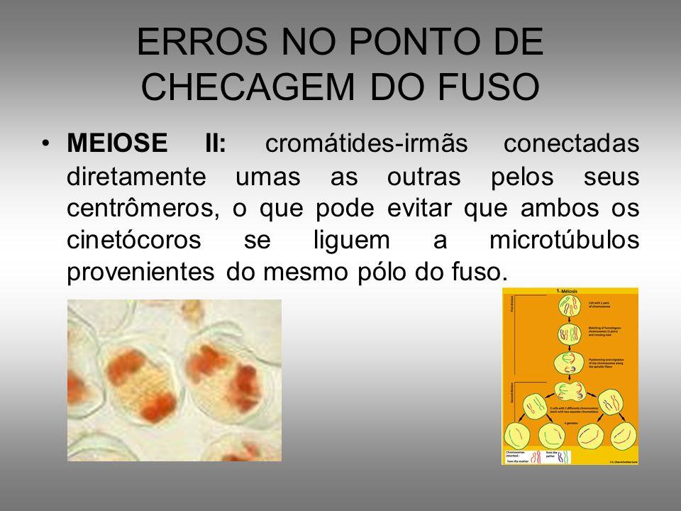 ERROS NO PONTO DE CHECAGEM DO FUSO MEIOSE II: cromátides-irmãs conectadas diretamente umas as outras pelos seus centrômeros, o que pode evitar que amb