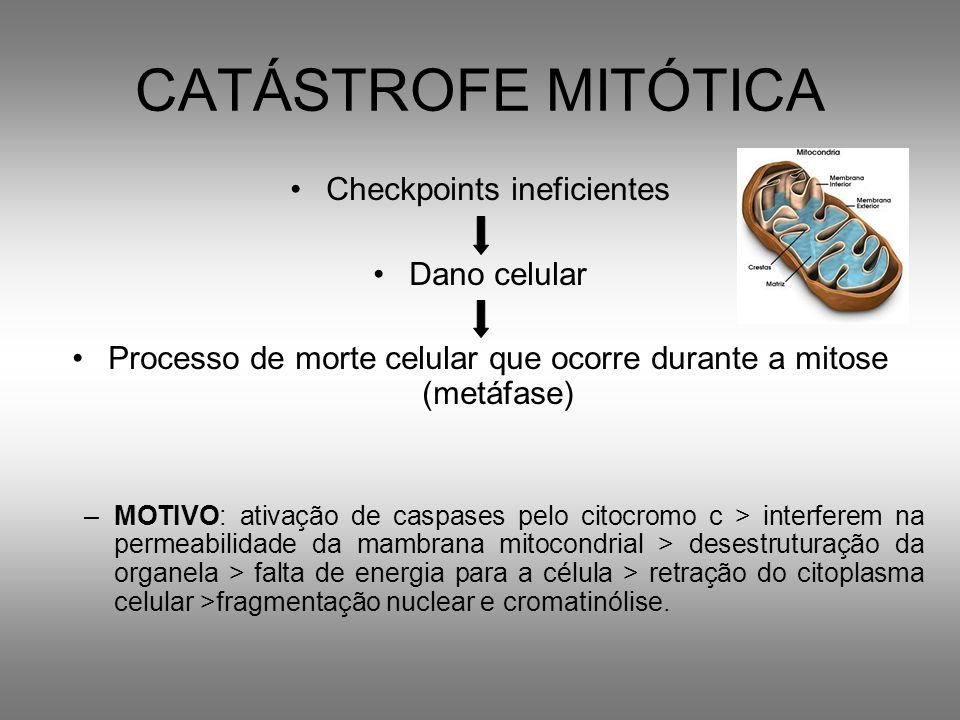 CATÁSTROFE MITÓTICA Checkpoints ineficientes Dano celular Processo de morte celular que ocorre durante a mitose (metáfase) –MOTIVO: ativação de caspas