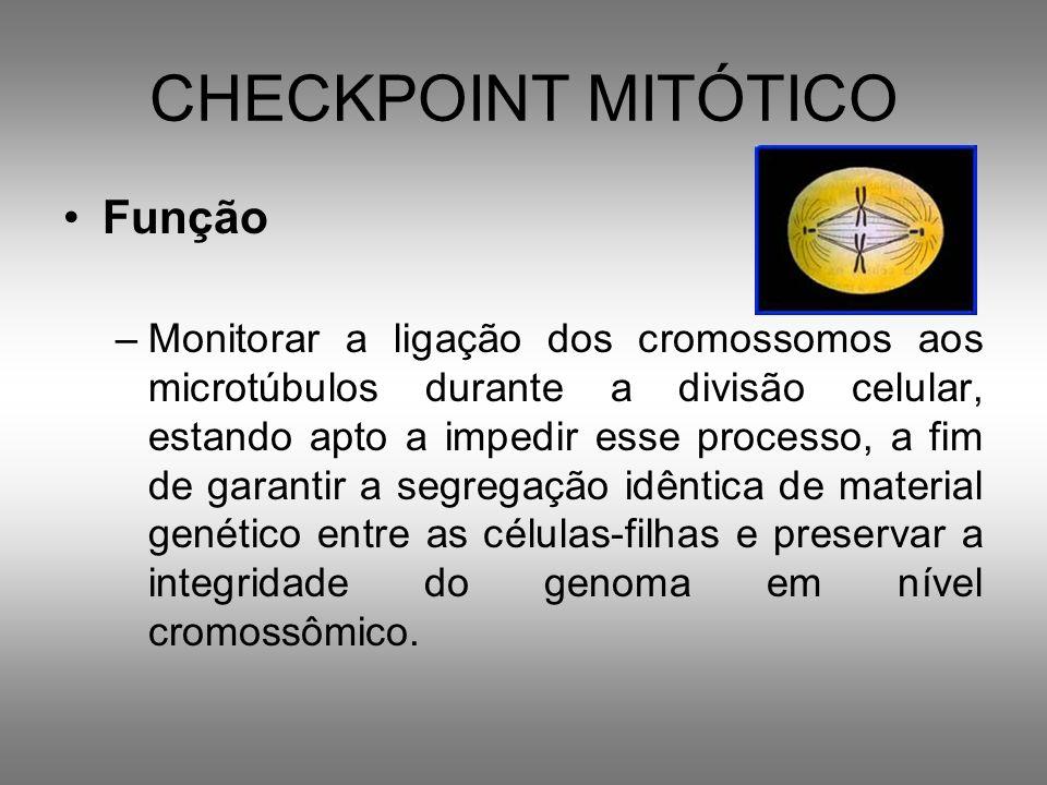 CHECKPOINT MITÓTICO MITOSE –ERROS NO PONTO DE CHECAGEM DO FUSO –Instabilidade cromossômica anomalias cariotípicas: Células: –Duas cópias de um cromossomo –Nenhum cromossomo