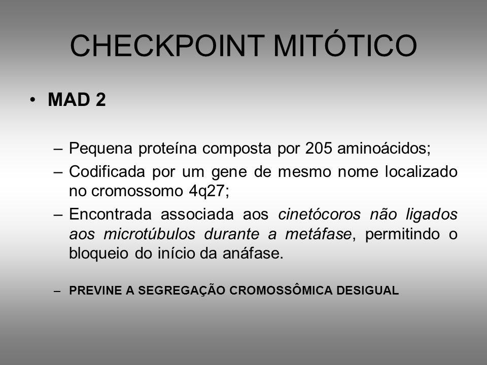 CHECKPOINT MITÓTICO MAD 2 –Pequena proteína composta por 205 aminoácidos; –Codificada por um gene de mesmo nome localizado no cromossomo 4q27; –Encont